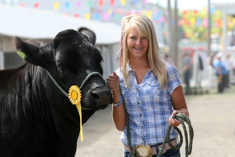 Showing Beef Steers