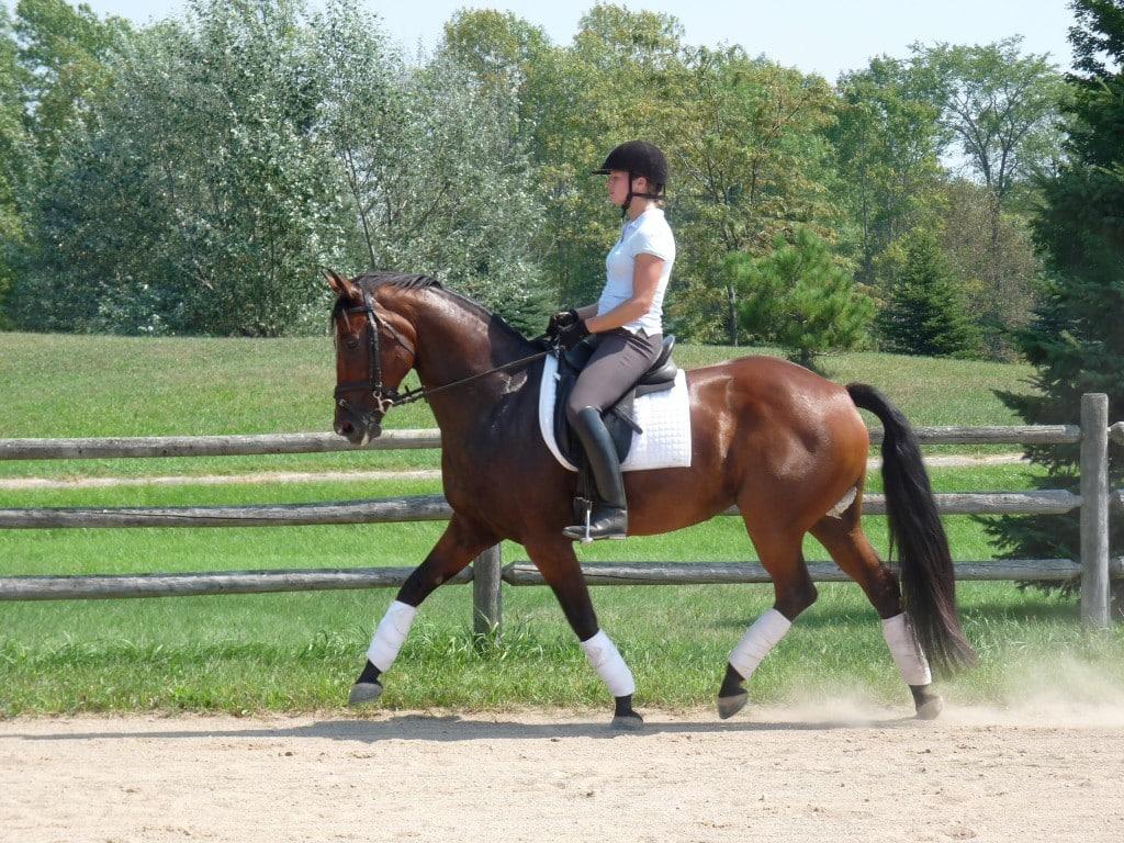 Horse Pony Junior Fair