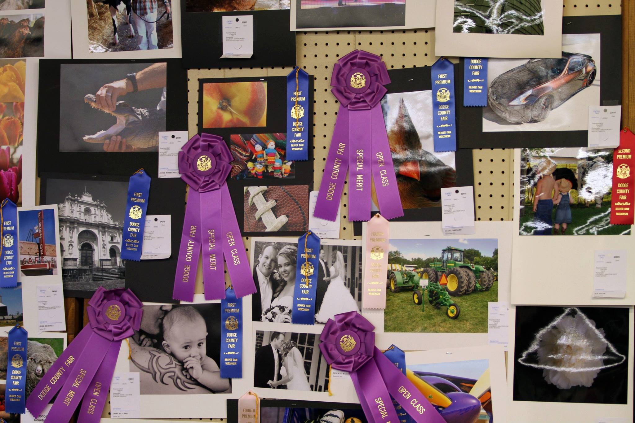 Photography Open Class Fair Exhibits