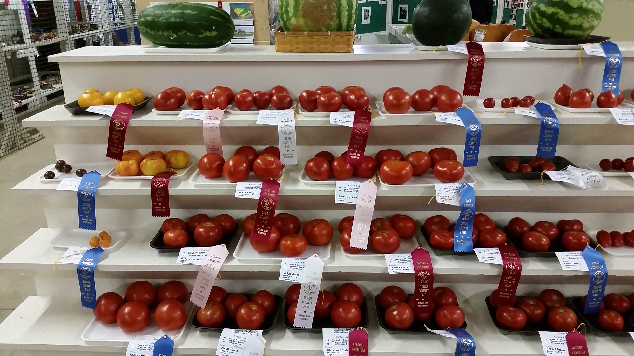 Junior Fair Vegetable Exhibits