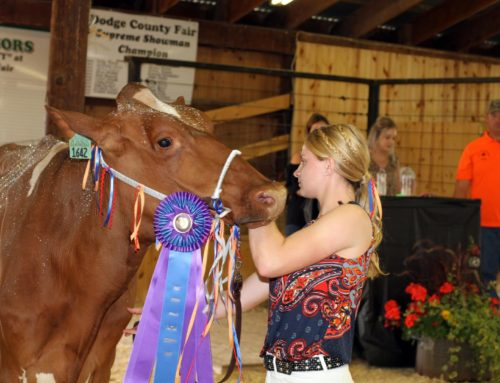 Youth livestock expo provides Dodge County youth with socially-distanced outlet to showcase projects