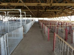 Dodge County Livestock Committee Swine Barn Remodel
