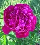 Dodge County Master Gardener Plant Sale