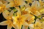 Fresh Flower Sale Dodge County Fairgrounds