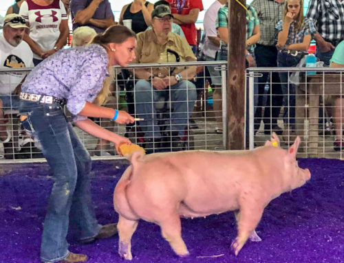 Dodge County 4-H teen works to include special-needs children in county-fair pig show