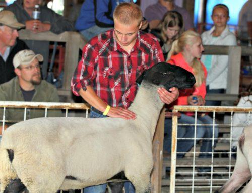 2021 Junior Fair Sheep Judging Results