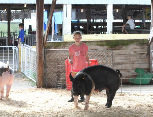2019 Junior Fair Swine Judging Results