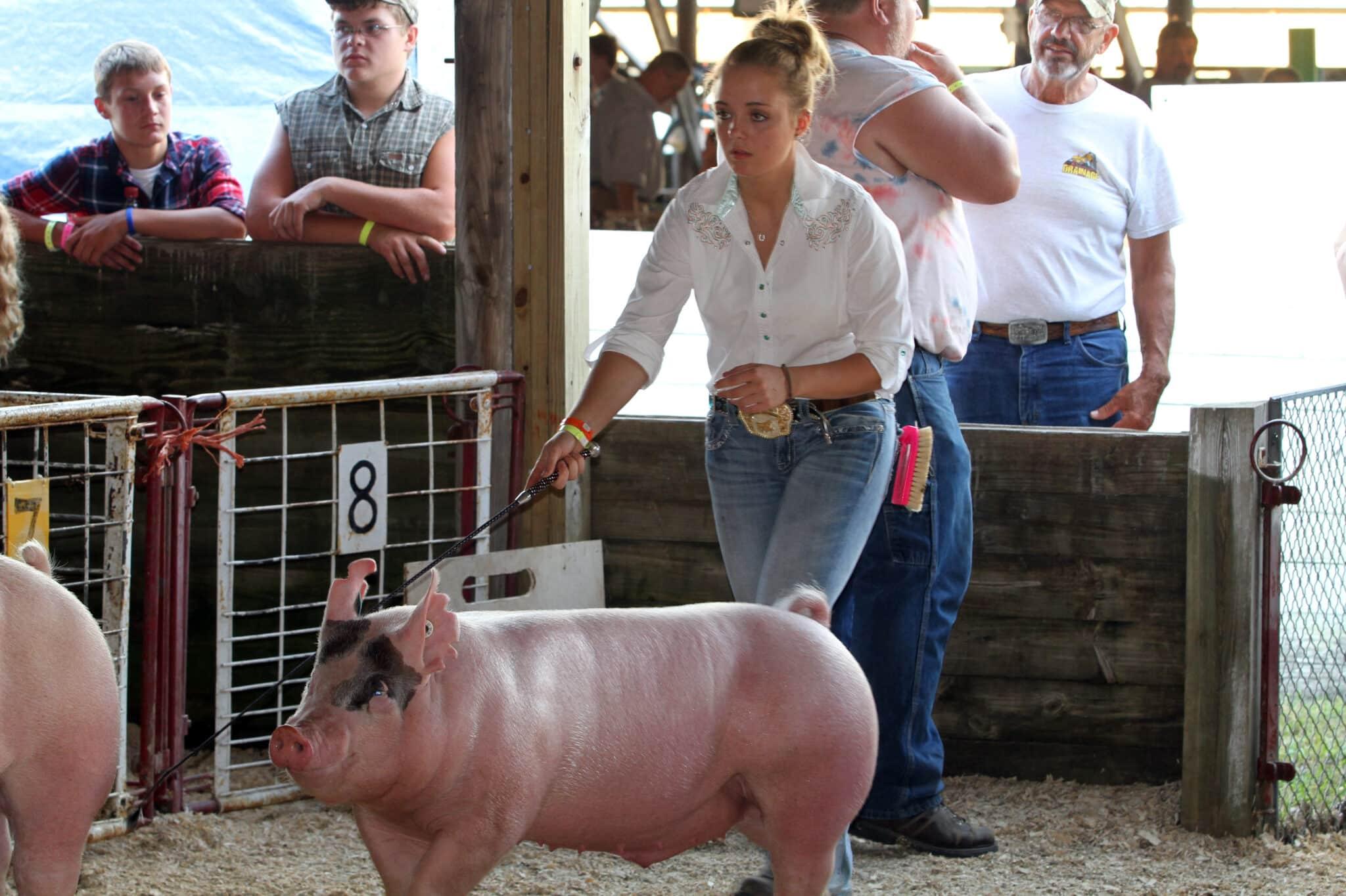 Swine Showmanship Judging Dodge County