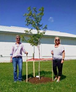 dodge county fair shade tree donation