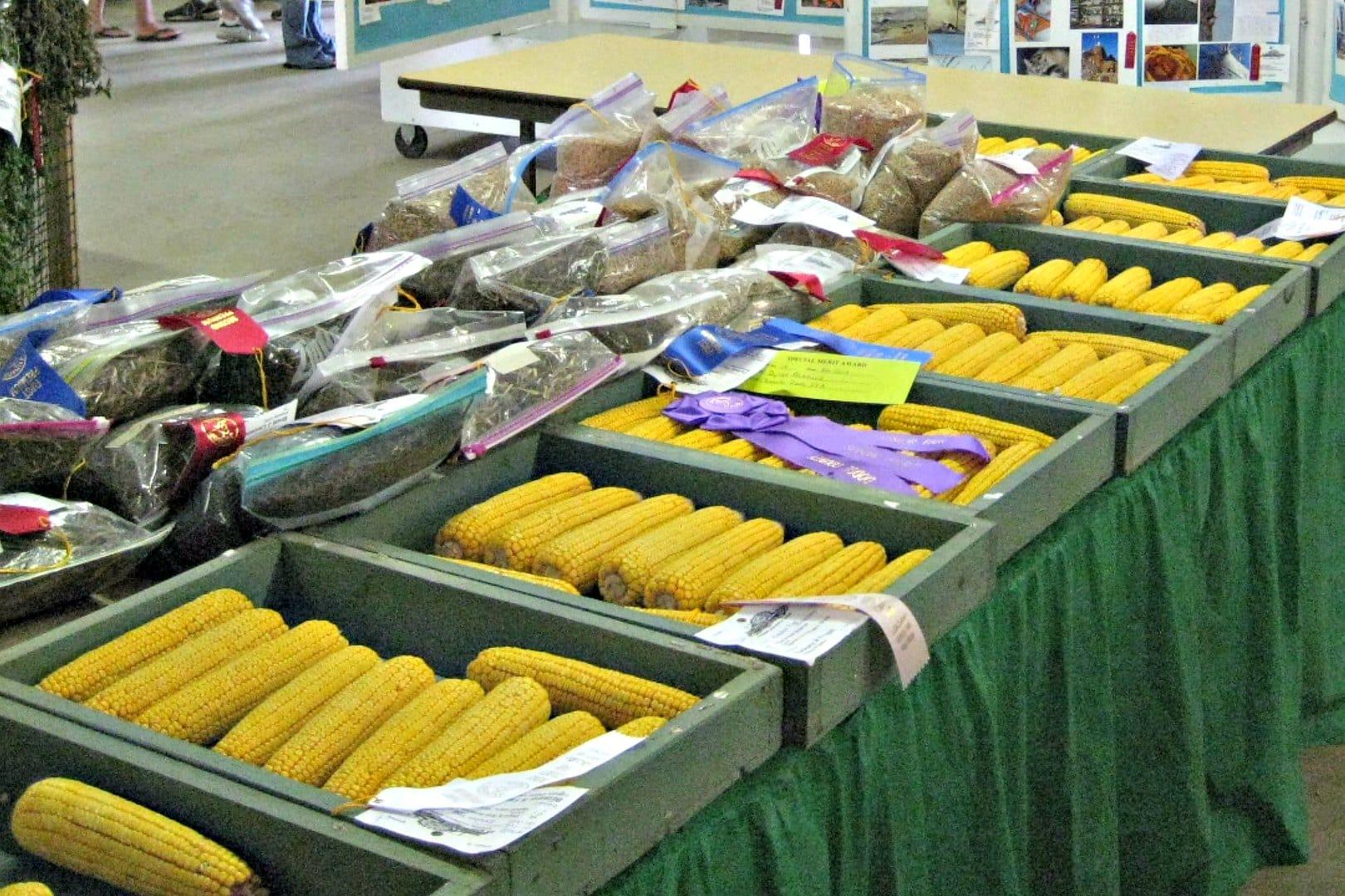 junior fair crops judging