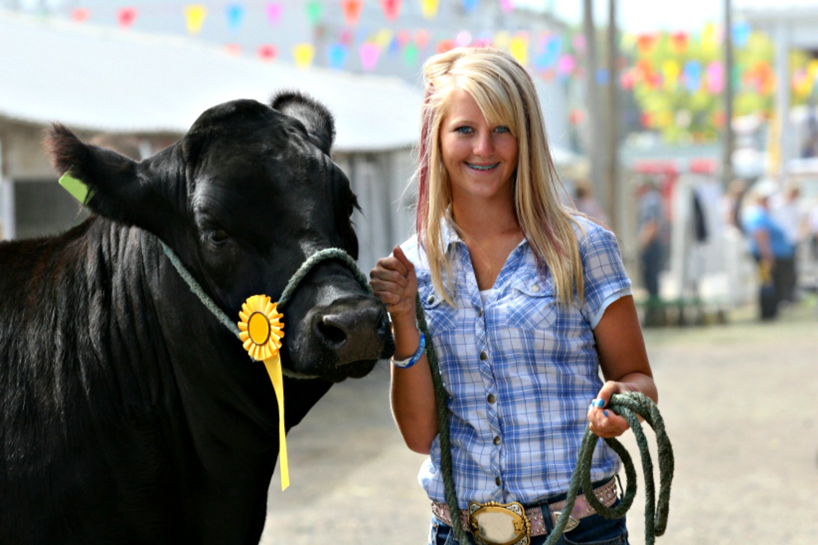 showing-beef-steers-dodge-county-fair
